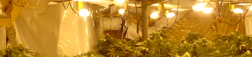 cannabis growhouse